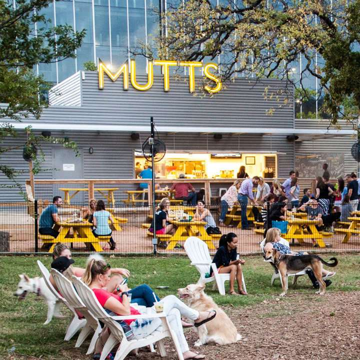 Mutts Canine Cantina with a dog-friendly seated area full of canines and highback white lawn chairs