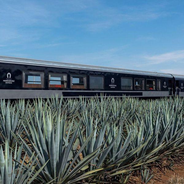 Tequila Herradura Express train in an agave field