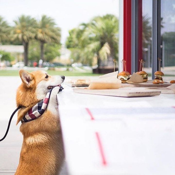Ray's & Stark Bar L.A. a Corgi has its front paws on the coutner as its eyeing a platter of sliders