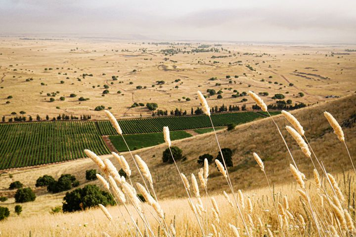 Israel's wine region