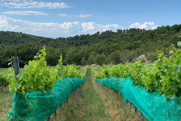 New netting to assess the effect of pollinators at Chêne Bleu