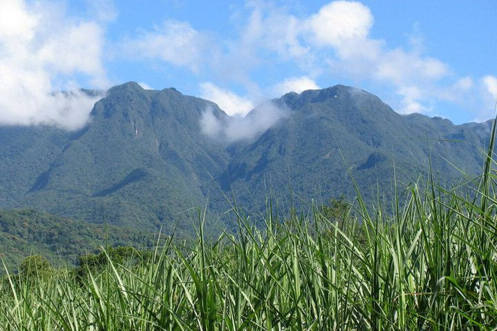 A sugar cane field in front of Curitiba's grassy mountains