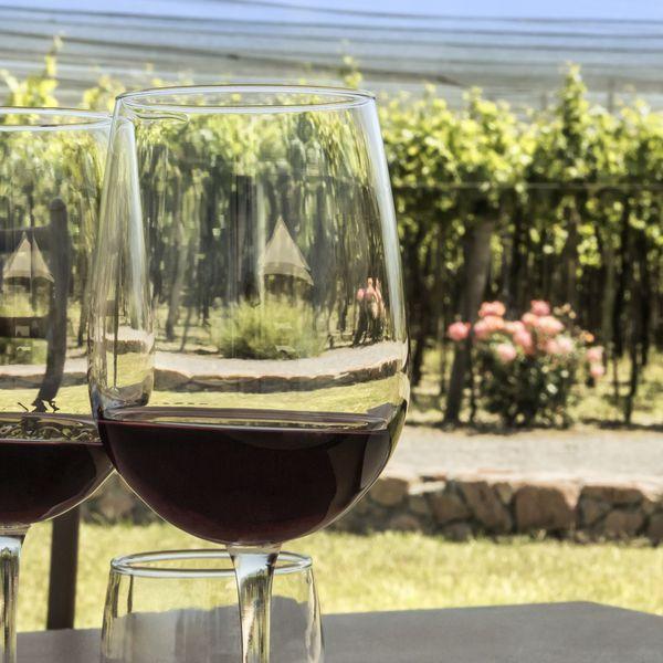 zinfadel wine