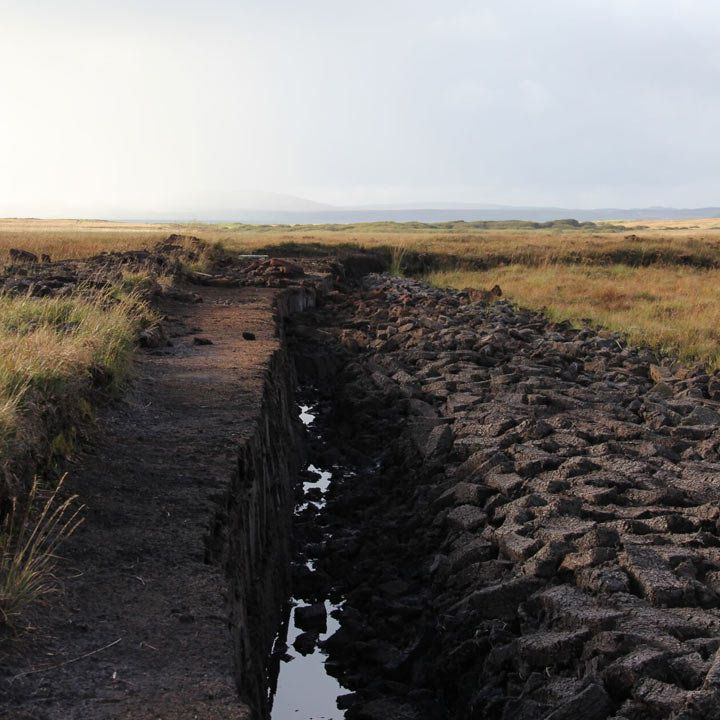 the signature peat dogs connected to Laphroaig Distillery