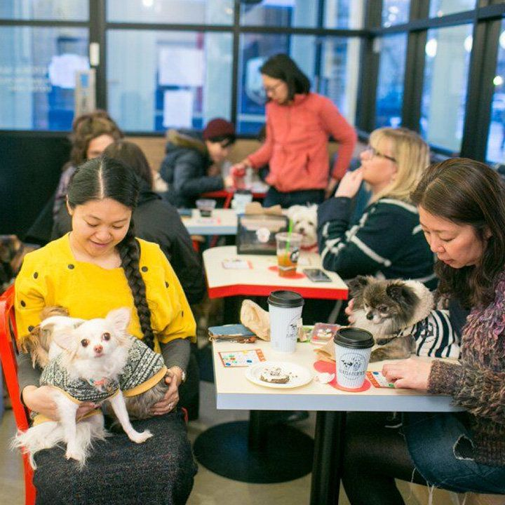 A cafe table with coffee cups on it and two patrons holding their lap dogs while seated