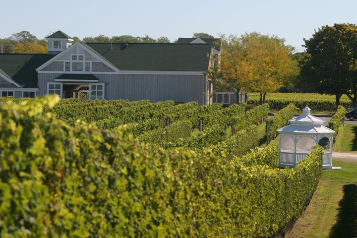 Long Island wine region