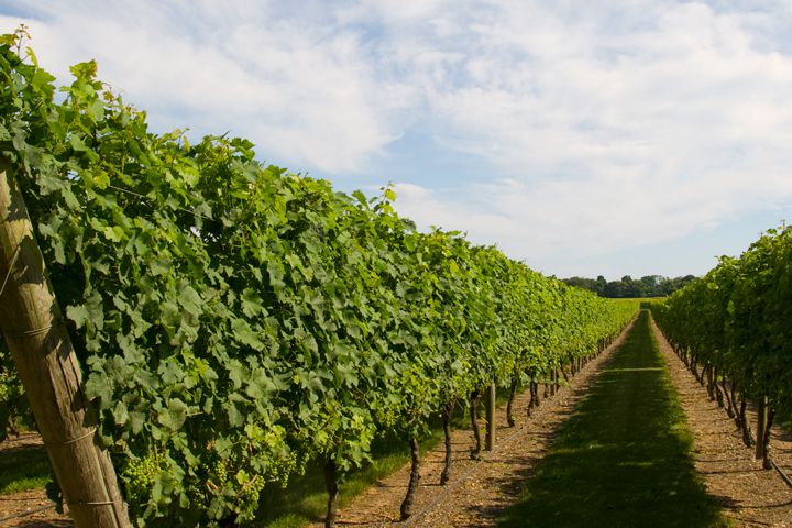 Newport wine region