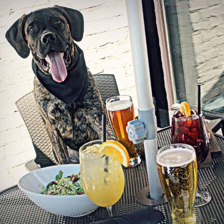 barrio chicago with an outdoor table loaded with drinks and a dog in a chair