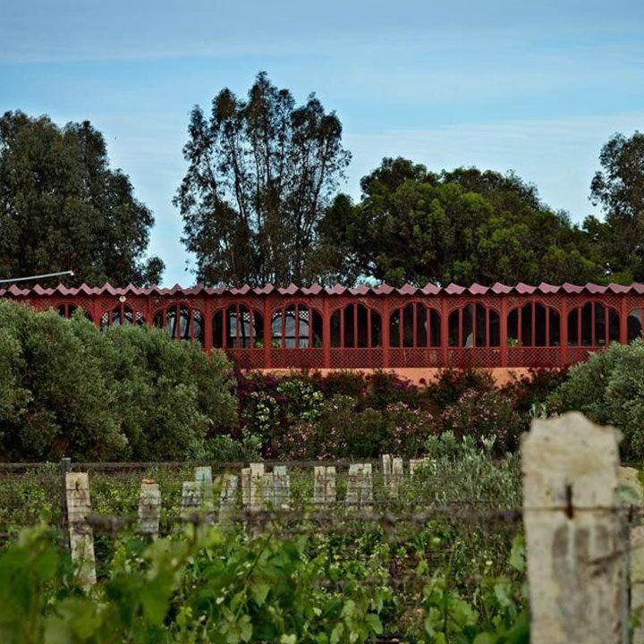 Domaine Val d' Argan winery. Grape trellises everywhere