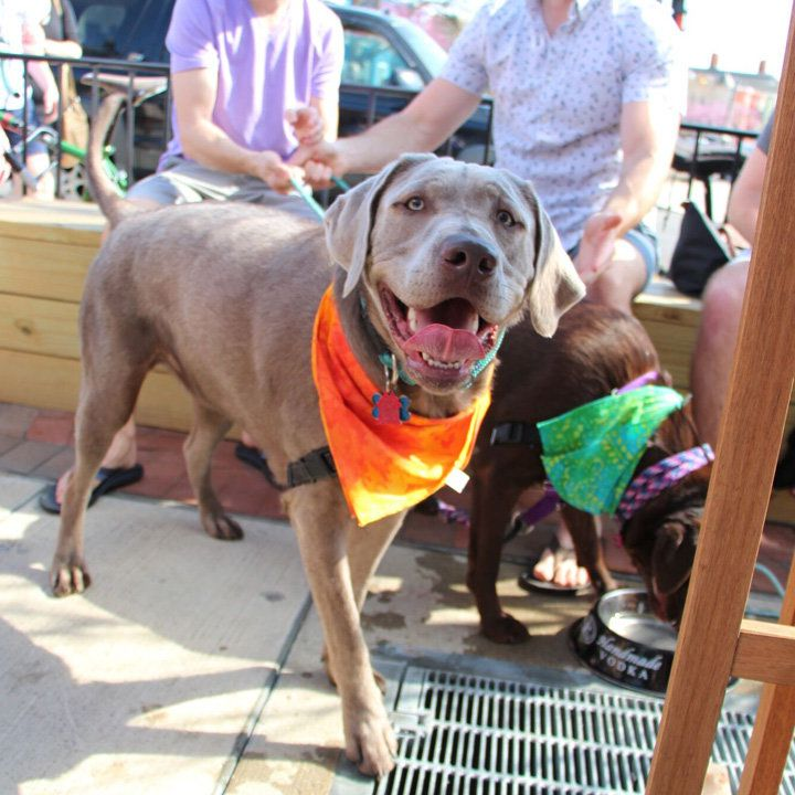 Wooden benches at Wet Dog Tavern D.C. and a pup in an orange bandana eyeing the camera