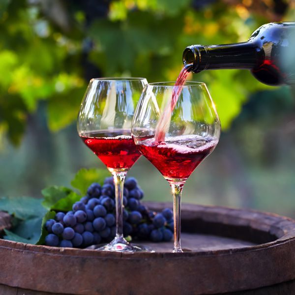 Pouring red wine in vineyard with grapes
